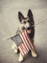 flagdog